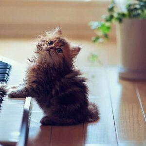 Вчимося грати на синтезаторі